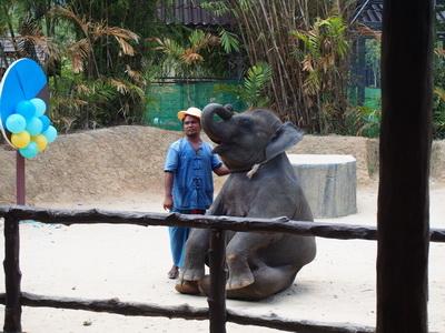 โชว์ช้าง Safari